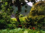 Tropical rainforest, Fatu Hiva Island, Marquesas Islands, French Polynesia Français : Forêt tropicale à Fatu-Hiva, Îles Marquises, Polynésie française