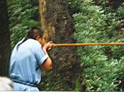 Demonstration of Eastern Cherokee blowgun in Oconaluftee Indian Village, Cherokee, North Carolina