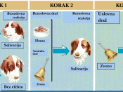 English: The course of classical conditioning.