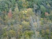 English: Deciduous forest at fall