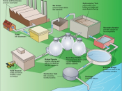 English: Steps in a typical wastewater treatment process.
