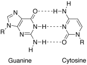English: image of the canonical watson-crick base pair between the guanine and cytosine nucleobases