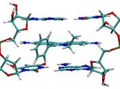 Ethidium intercalated between two adenine-thymine base pairs.