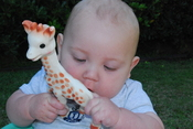 English: Baby playing with Sophie the Giraffe.