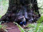 English: Photograph by Mario Vaden, at Simpson Reed Discovery Trail: Jedediah Smith Redwoods State Park of Northern California. Image shows a large coast redwood trunk, with arborist Mario Vaden, aka M. D. Vaden, for size comparison. Category:Images of Ca