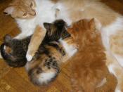 kittens 011