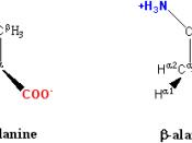 β-alanine and its α-alanine isomer