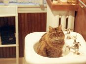 Coz waits for me to turn on the water in the sink