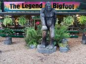 Bigfoot store