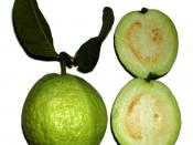 Green apple guavas are less rich in pigment antioxidants