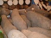 Yam in a market