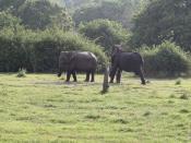 Breastfeeding, elephant style