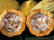 Ghana, is only second in the world to Côte d'Ivoire in the production of cocoa