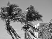 Monochrome image of palm trees at .