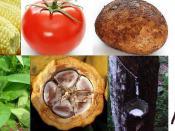 Montage of New World Domesticated plants. Clockwise, starting from top left: 1. Maize (Zea mays) 2. Tomato (Solanum lycopersicum) 3. Potato (Solanum tuberosum) 4. Vanilla (Vanilla) 5. Pará rubber tree (Hevea brasiliensis) 6. Cacao (Theobroma cacao) 7. Tob