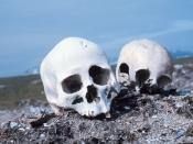 Skulls on a Beach: