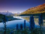 English: Bachalpsee in the morning, Bernese Alps