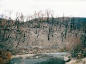 English: Aftermath of the 2003 Eastern Victorian alpine bushfires showing the Big River and hillsides near the Omeo Highway (probably from the Bundara River picnic ground), north of Anglers Rest, Victoria, Australia.