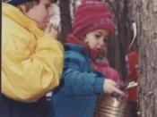 Avery Coonley School students tapping maple trees.