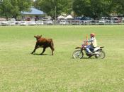 Motorcycle campdrafting, run owing to the Equine Influenza outbreak and ban on horses, Walcha, NSW