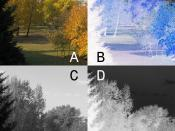 Color, positive picture (A) and negative (B), monochrome positive picture (C) and negative (D)