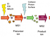 Schematic representation of a tandem mass spectrometry experiment