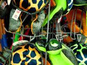 Turtles Burnham on Sea Somerset UK #dailyshoot