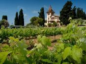 Tempranillo vines, Clos la Plana vinyard, Penedes region, Spain 2006