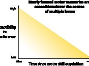 English: Graph showing motor memory consolidation process