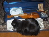 Violin Case w/ Cat