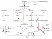 English: Figure from Journal publication of schematic overview of a biosynthetic pathway