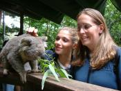 Two Girls Koala animals friends