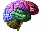 English: Brain viewed from the right side showing the 4 major cerebral lobes. This is a digitally enhanced version of an illustration from Manuel de L'anatomiste, by Charles Morel and Mathias Duval, published in 1883