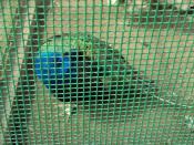 English: Caged bird at the Botanic Gardens, Churchtown, Southport, Merseyside, England.