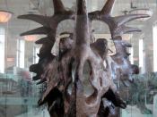 Styracosaurus albertensis, American Museum of Natural History.
