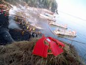U.S. Navy Mechanized Landing Craft (LCMs) are anchored along the shoreline as Navy and civilian personnel position hoses during oil clean-up efforts on Smith island. The massive oil spill occurred when the commercial tanker Exxon Valdez ran aground while