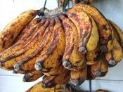 English: Banana (barangan red), Indonesia Bahasa Indonesia: Pisang barangan merah