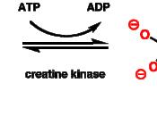 Українська: Схема 1 — Метаболізм креатину.
