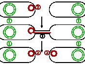 Conjugative plasmids