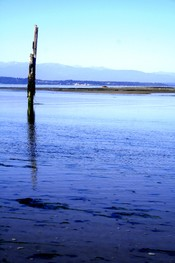 Kitsap Seen From Whidbey Island