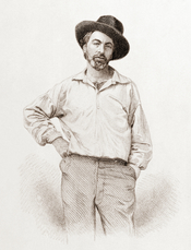 Steel engraving of Walt Whitman. Published in 1855 edition of Leaves of Grass