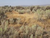 Carey sagebrush steppe