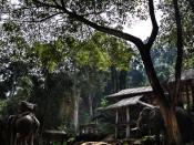 English: Elephant camp,North Thailand