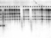 Rice Genetics II_p446
