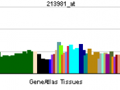 English: Gene expression pattern of the COMT gene.