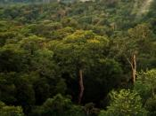 English: View of Amazon basin forest north of Manaus, Brazil. Image taken from top of a 50 m tower for meteorological observations, and the top of vegetation canopy is typically 35 m. The image was taken within 30 minutes of a rain event, and a few white