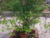 English: Tulasi Katte is found in front of many houses of Hindus.