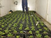 Day 46 - West Midlands Police - Cannabis Drugs Raid