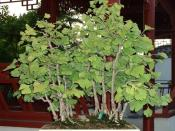 Ginkgo is a natural supplement used by some with ADHD.