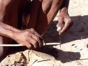 San (Bushmen) preparing poison arrows by using roasted seeds of Bobgunnia madagascariensis (=Swartzia m.) and innards of Diamphidia nigroornata, Namibia (border to Botswana)